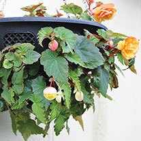 Easi Plant Hanging Baskets 14in (pair)