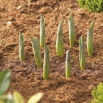 Bulb Planter - Round 30cm