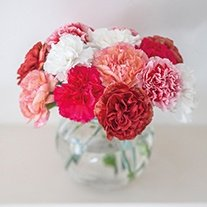 Perpetual Carnation Collection