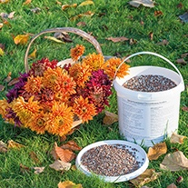Chrysanthemum Fertiliser