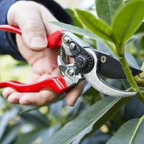 Professional Left Hand Bypass Secateurs/Pruner