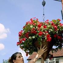 Darlac Hanging Baskets Hi-Lo
