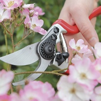 Expert Bypass Secateurs/Pruner
