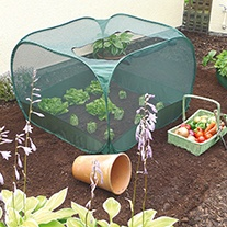 Pop-Up Vegetable Cage
