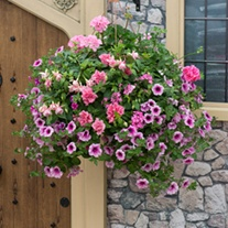 Pink to Rose Basket Mix