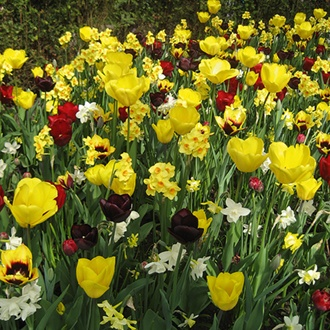 Yellow and Maroon Shades Bulb Collection