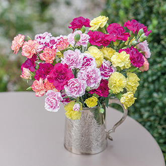 Spray Carnation Collection