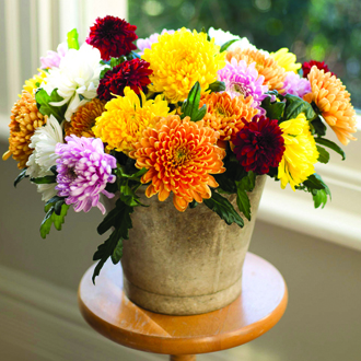 Chrysanthemum Bloom Collection