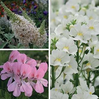 Scented Pink and White Pot Collection