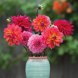 The Sunset Sky Dahlia Collection