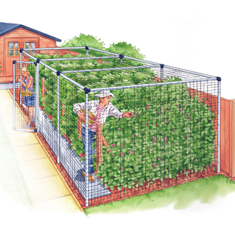 Standard Fruit Cage 12'x36'