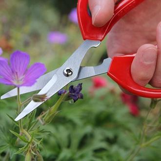 Softies Scissors