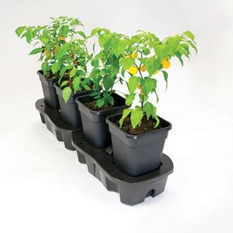Quadgrow Watering  System 4 pots