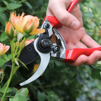 Darlac Professional Pruner Secateurs/Pruner