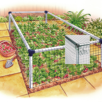 Standard Strawberry Cage 3'x36'