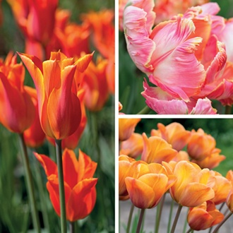 Tulip Scented Collection
