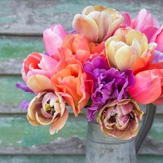 Tulip Gardeners' World Mix