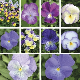 Viola Saver collection