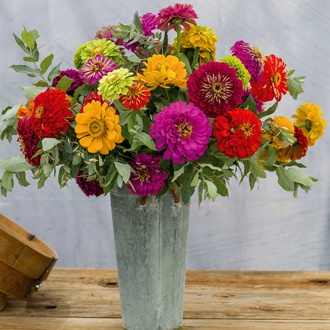 Zinnia Giant Cut Flower Mixed