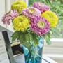 Chrysanthemum Lime, Pink & Purple