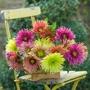 Chrysanthemum Starburst Collection