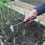 Darlac Short Handled Onion Hoe