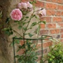 Border Plant Supports (25.5cm x 86cm) x 5