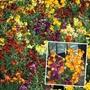 Wallflower Persian Carpet Mixed