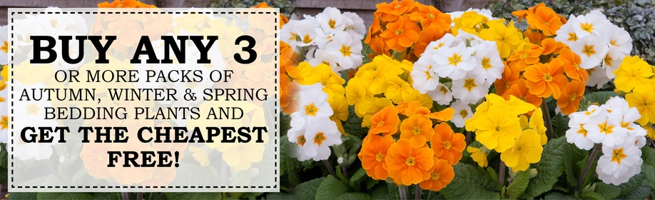 3 for 2 Bedding Plants