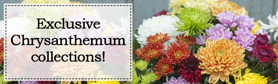 Exclusive Chrysanthemum Collections