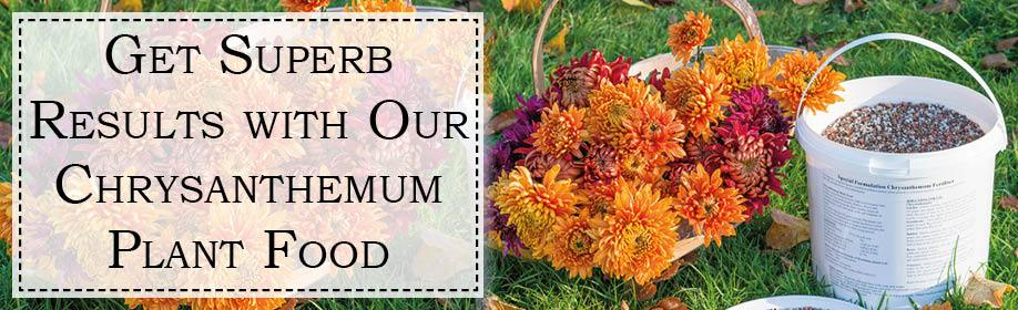 Chrysanthemum Plant Food