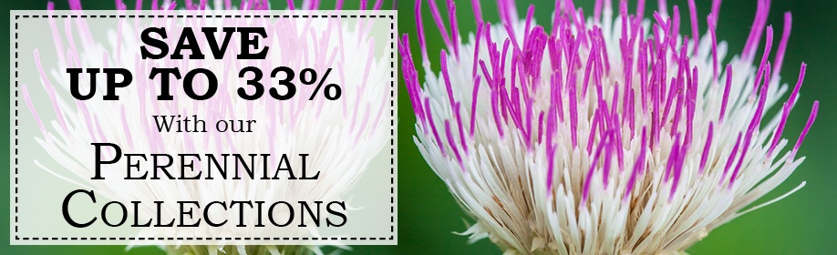 Save up to 33% with our perennial collections.