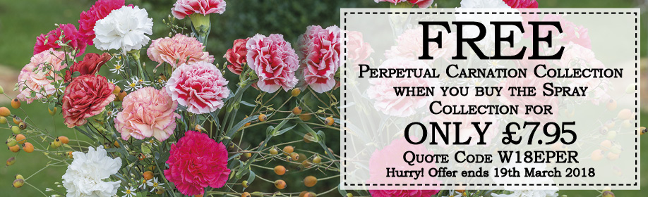 Free Carnation Collection