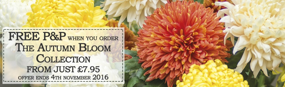 Autumn Bloom Collection - FREE P&P