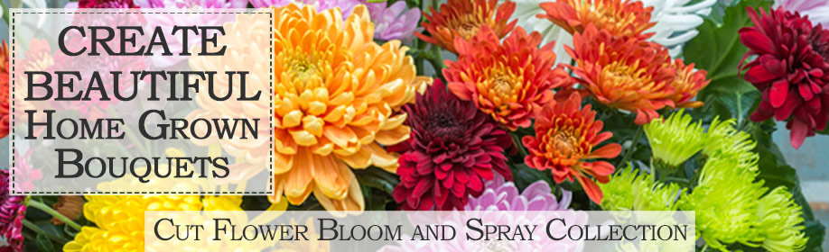 Cut flower bloom and spray collection
