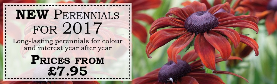 New Perennials for 2017